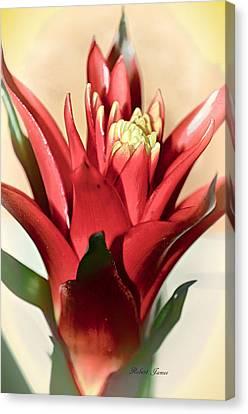 Kapiolani Bromeliad Canvas Print by Robert McPeek
