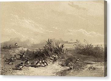 Karl Bodmer, Canards Sauvages, Swiss, 1809 - 1893 Canvas Print