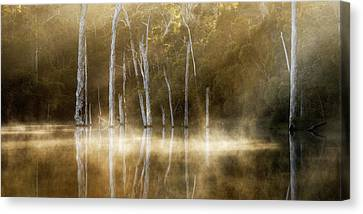 Karri Valley Canvas Print