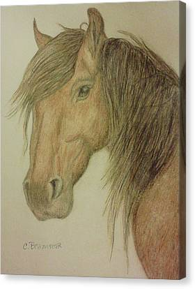 Kathy's Horse Canvas Print by Christy Saunders Church