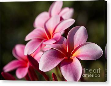 Kaupo Summer Treasure Canvas Print by Sharon Mau