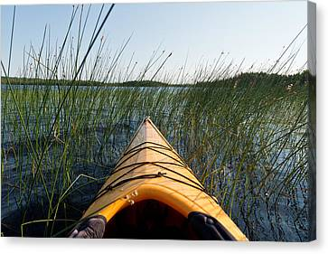 Kayaking Through Reeds Bwca Canvas Print