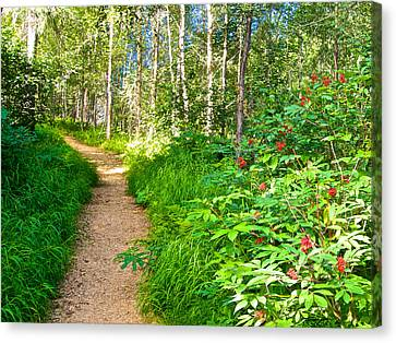 Keen-eye Nature Trail In Kenai National Wildlife Refuge In Soldotna-ak Canvas Print by Ruth Hager