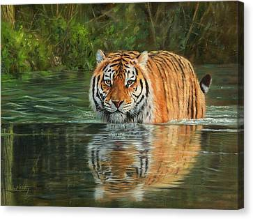 Keeping Cool Canvas Print by David Stribbling
