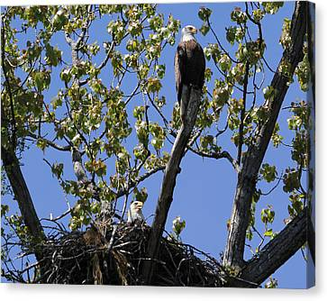 Keeping Lookout Canvas Print by Bruce  Morrell