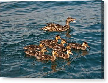 Canvas Print featuring the photograph Keeping Them All Inline by Brenda Jacobs