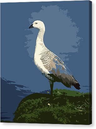 Kelp Goose Canvas Print by Anthony Dalton
