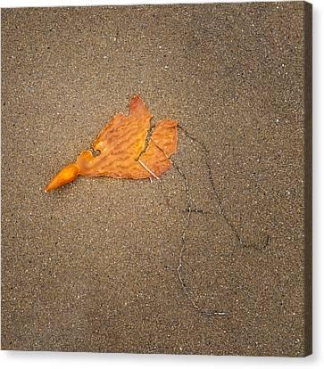 Kelp Canvas Print by Joseph Smith