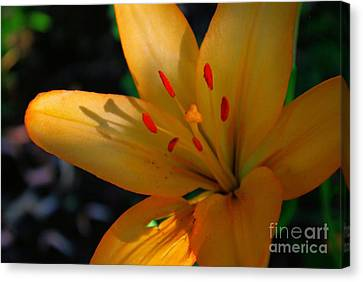 Canvas Print featuring the photograph Kenilworth Garden One by John S