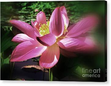 Canvas Print featuring the photograph Kenilworth Garden Three by John S