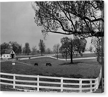 Kentucky Bluegrass Horse Racing Farm Canvas Print by Retro Images Archive