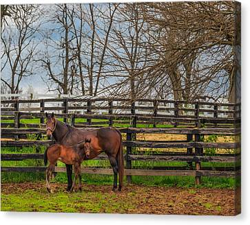 Kentucky Mare And Foal Canvas Print