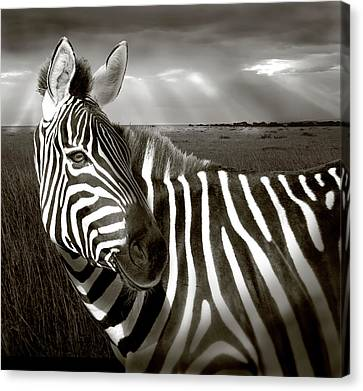 Kenya Black & White Of Zebra And Plain Canvas Print