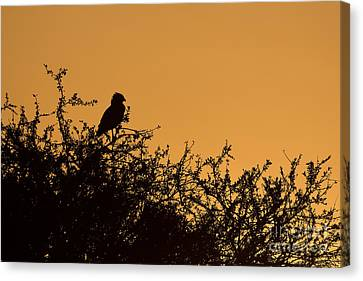 Kenyan Sunrise Canvas Print