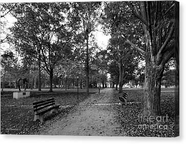 Kenyon College Middle Path Canvas Print by University Icons