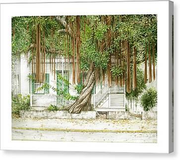 Key West Banyan Canvas Print by Bob  George