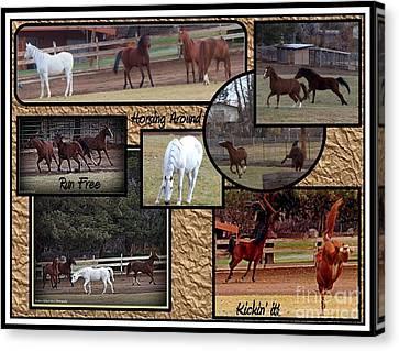 Horses Kickin It  Canvas Print