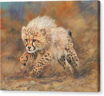 Cheetah Canvas Print - Kicking Up Dust 3 by David Stribbling