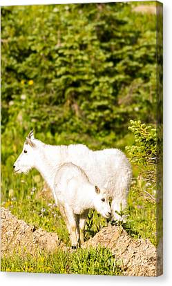 Kids In Glacier 4 Canvas Print by Natural Focal Point Photography