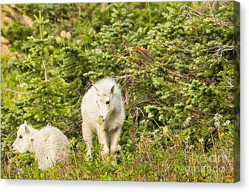 Kids In Glacier Np 3 Canvas Print by Natural Focal Point Photography