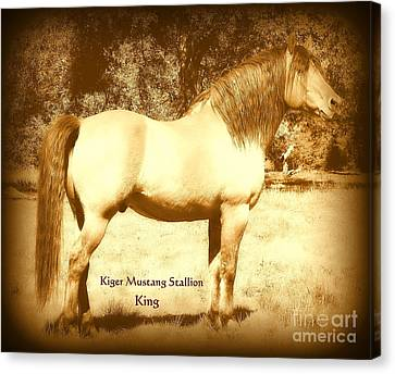 Kiger Mustang Stallion King Sepia Canvas Print by Jodie  Scheller
