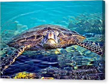 Kiholo Turtle Canvas Print by Bob Kinnison