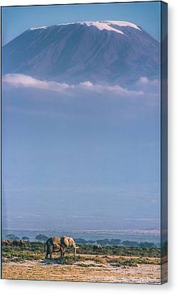 Kilimanjaro And The Quiet Sentinels Canvas Print