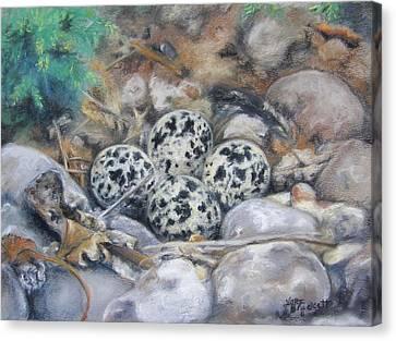 Killdeer Nest Canvas Print by Lori Brackett