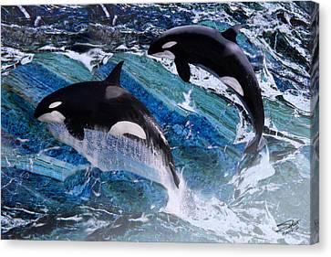 Wild Orca Whales Of Florida Canvas Print by Matthew Schwartz