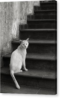 Canvas Print featuring the photograph Kimba by Laura Melis