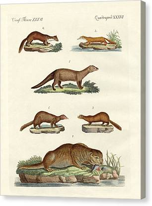 Kinds Of Otters And Marten Canvas Print by Splendid Art Prints