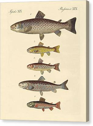 Kinds Of Trouts Canvas Print by Splendid Art Prints