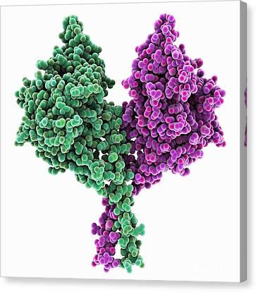 Kinesin Motor Protein Canvas Print