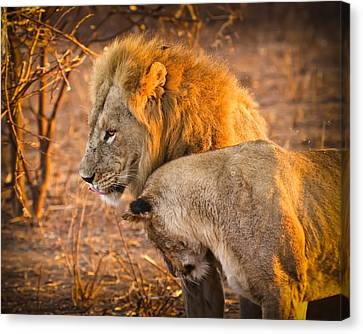 King And Queen Canvas Print by Adam Romanowicz