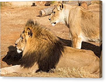King And Queen Canvas Print by John Ferrante