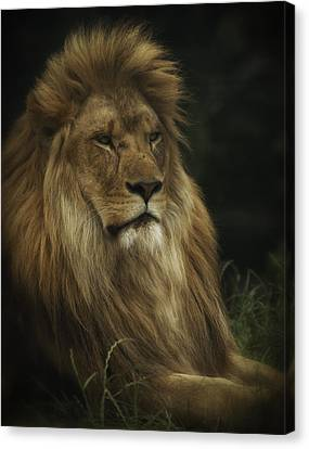 Canvas Print featuring the photograph King by Chris Boulton