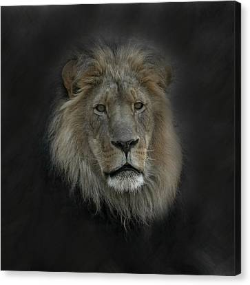King Of Beasts Portrait Canvas Print