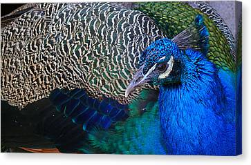 King Of Colors Canvas Print by Evelyn Tambour