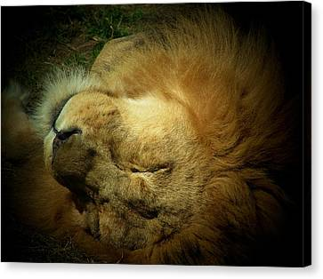 King Of Peace,lion Canvas Print
