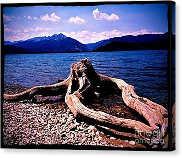 King Of The Driftwood Canvas Print by Garren Zanker