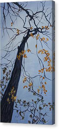 King Of The Forest Canvas Print by Janet Felts