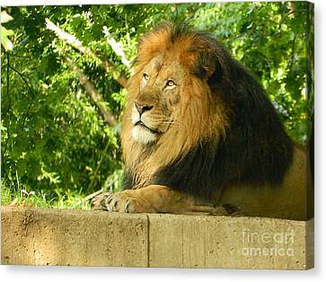 Canvas Print featuring the photograph King Of The Jungle by Emmy Marie Vickers