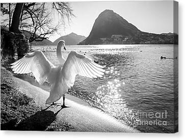 King Of The Lake Canvas Print by Ning Mosberger-Tang