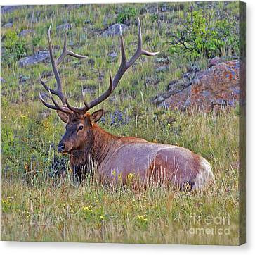 King Of The Meadow Canvas Print