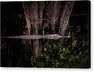 Canvas Print featuring the photograph King Of The River by Steven Sparks
