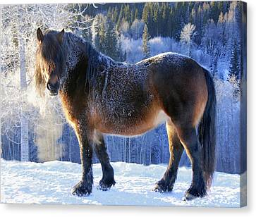 Breath Canvas Print - King Of The Valley by Annicawesterlund