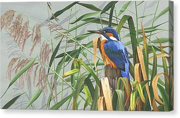 Kingfisher Canvas Print by Clive Meredith