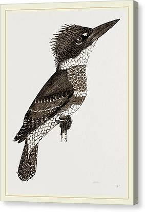 Kingfisher Canvas Print by Litz Collection