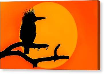 Kingfisher Sunset Canvas Print