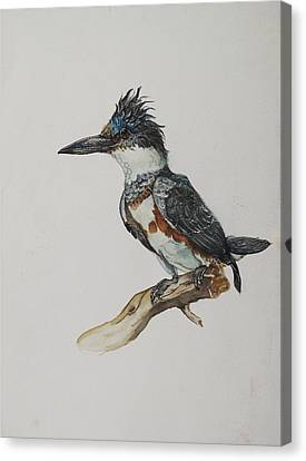Alfred Ng Art Canvas Print - Kingfisher Watercolor by Alfred Ng